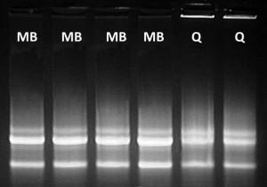 RNA-gel