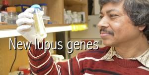 Lupus-Genes-630x320